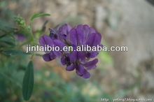 100% natural Alfalfa Extract brand JT for pharmaceutical ingredient