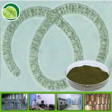 kelp seaweed extract Fucoidan 10-95%/fucoidan extract