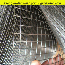 anping hongtong stainless steel bird cage wire mesh