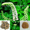 100% Pure Natural Extract Black Cohosh P.E.