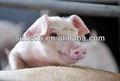 Complejo enzima para alimentación animal Nutrizyme SFC-061