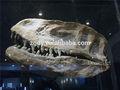 Animato dinosauro fossile( testa di yangchuanosaurus)