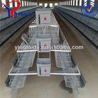 poultry farm design (production equipment )