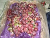 Hot Sale Fresh Red Grapes
