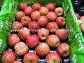 nova temporada fresh maçãs royal gala