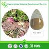 Natural Maca Root Extract Powder