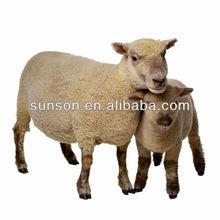 beta-glucanase enzyme for animal feed Nutrizyme BGL16