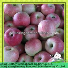 China fresh royal red gala apple