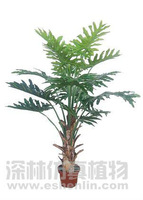 real touch excellent tropical tree plant,areca palm tree
