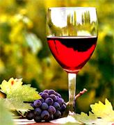 Chilean Wine & Organic Chilean Wine