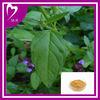 100% Natural Prunella Vulgaris Linn. Extract Powder