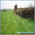 Le cerf escrime/jeu clôtures/clôtures pour le bétail( bv, certification usine)