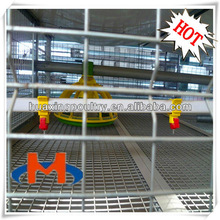 2013 hot sale H type broiler chicken shed (factory price )