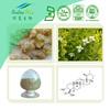 100% Natural Boswellia Extract 65% Mastic Acid