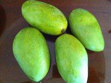 Fresh Mango Fruit