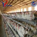 projeto quinta camada de aves equipamentos design gaiola de galinha com bom preço