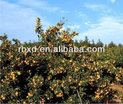 crop new juicy best citrus fruit baby mandarin orange Tangerine farm manufacturer factory