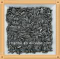 sementes de girassol óleo como raçãoparaanimais