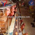 As galinhas de frangos de corte o galpão