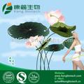 Quemador de grasa de las hierbas chinas en polvo procedentes de la fábrica de china, flor de loto p. E. Nuciferina
