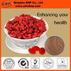 New Xinjiang High Quality & 100% Natural Goji Berry Juice Powder