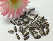 sunflower seed sunflower oil malaysia 5009