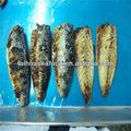 melhor comida e nomes de peixes pequenos