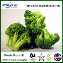 Frozen Broccoli Cut