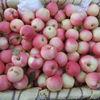 Hot ! Hot! Hot! 2014 cheap apple fruit gala apple