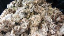 Greasy Raw Merino Sheep Wool