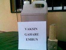 SUNTIKAN POKOK GAHARU RM50. PERPOKOK