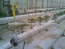 GALUKU Hydro Cs Hydroponics Plant Grow Bags