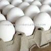 Egg Wholesalers