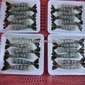 novo e popular de venda hlso camarão branco