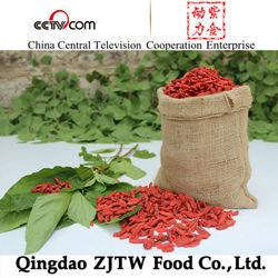 organic goji berries,dried fruit factory goji