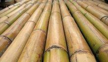 Guadua Bamboo best price guaranteed