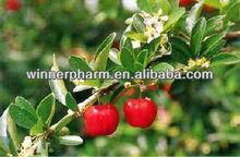 Natural Vitamin C,Acerola Cherry Extract