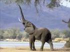 ANIMALS & ELEPHANT REPELLER