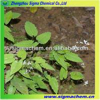Randy Beef Grass Epimedium Extract