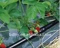 serra agricoltura usato con impianto di irrigazione goccia a goccia tubo rotondo gocciolatori