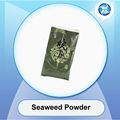 algues en poudre de fruits de mer en bonne santé