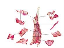 Halal Frozen Goat Meat