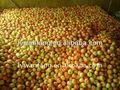 2014 venda quente real fresca de maçã gala