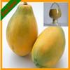 Organic Carica Papaya Extract Papain/Papaya Enzyme