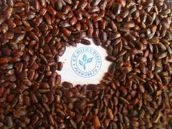 Albizia Saman Seeds | Samanea Saman Seeds | Trembesi