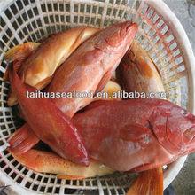 iqf frozen catfish exporters