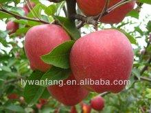 wholesale fresh gala apple names all dry fruits