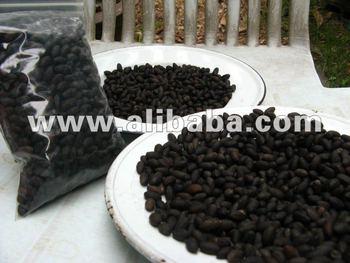 Lignum Vitae Seed