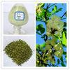 Sophora Japonica Extract Rutin(Rutoside) 95% 98%
