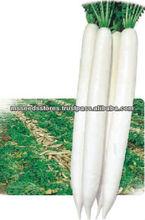 Hybrid Radish Mino Early Long White Seeds
